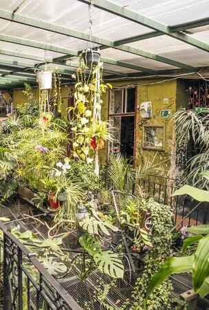 Indoor garden in a bar of Budapest. Imagens
