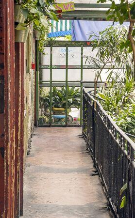 Indoor garden in a bar of Budapest. 版權商用圖片