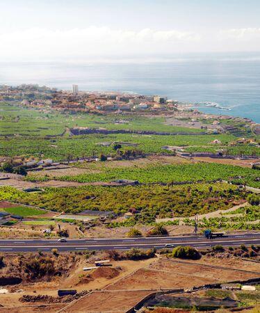 Vineyards on the island of Tenerife