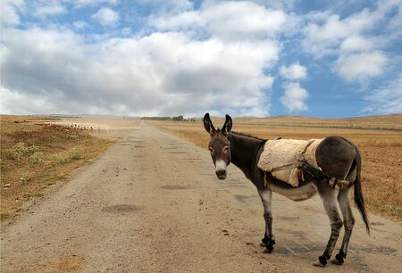 Donkey on the road in the countryside Imagens