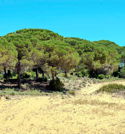 Fields of Andalusia with trees