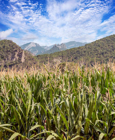 Fields of Catalonia in the north of Spain in a sunny day