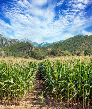 Fields of Catalonia in the north of Spain in a sunny day Stock fotó