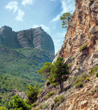 Catalonia pyrenees mountains with trees and nature landscape
