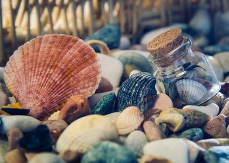 Jar におけるヒューマニズム マルチカラー シェルと海洋の背景。