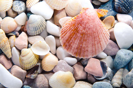Marine background of multi-colored sea shells. Top view
