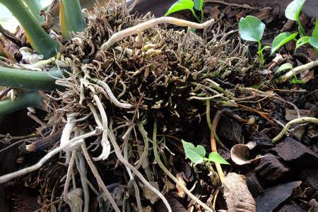 planta con raiz: Ra�ces de las plantas en el jard�n