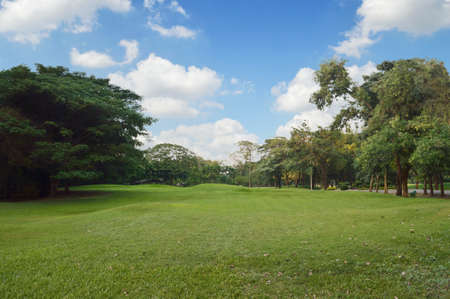 Green grass and trees in public park, Bangkok Thailand