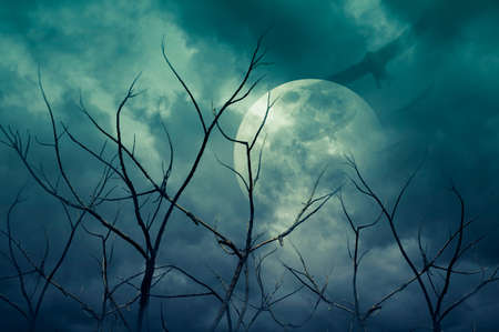 spooky forest: Spooky forest with full moon, dead trees and birds, Halloween background
