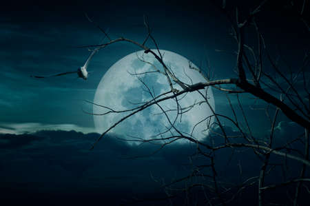 Spooky forest with full moon, dead trees and birds, Halloween background