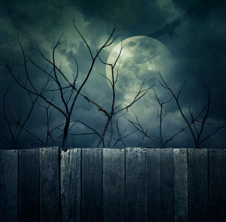 scary: Spooky forest with full moon, dead trees and birds, Halloween background