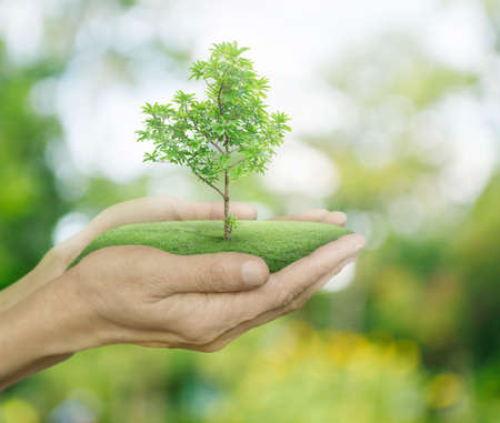 Growing green tree in hands on green bokeh background, Ecology concept Stockfoto
