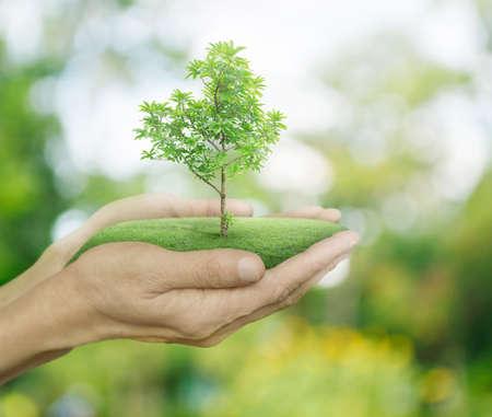 Growing green tree in hands on green bokeh background, Ecology concept Standard-Bild