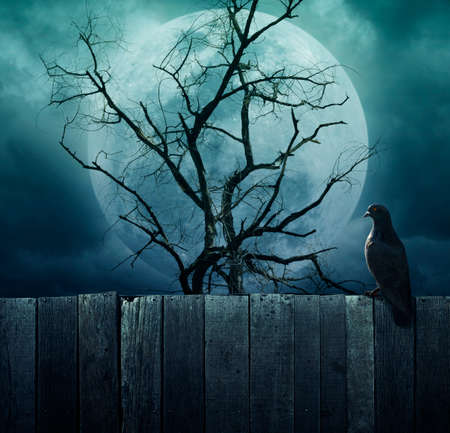 spooky tree: Bird stand on wood fence on spooky tree with moon background, Halloween background
