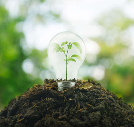 Light Bulb with small plant inside on pile of soil over green environment, Eco concept Stockfoto