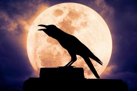 cuervo: Crow sentado en la roca y graznidos contra la luna llena, Fondo de Halloween