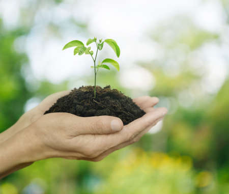 Hands holding a fresh young plant with soil over green tree bokeh background, Ecology concept