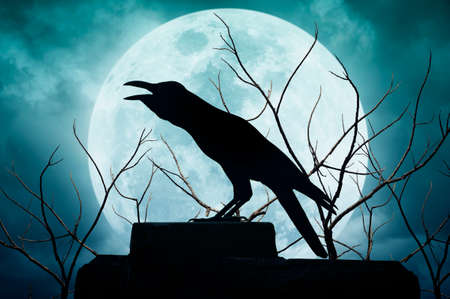 croak: Crow sitting on the rock and croaks against full moon, Halloween background