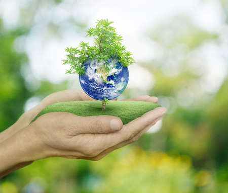 environmental protection: Planet and tree in human hands on green bokeh background, Save the earth concept  Stock Photo
