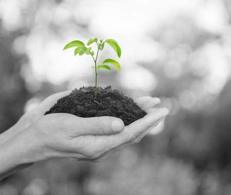 albero della vita: Mani in possesso di un giovane pianta fresca con terreno su sfondo verde albero bokeh, concetto di ecologia Archivio Fotografico