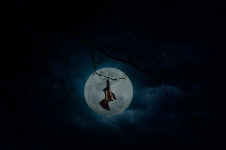 over the moon: Bat scream and hang on dead tree over moon and cloudy sky, Mysterious background, Halloween concept