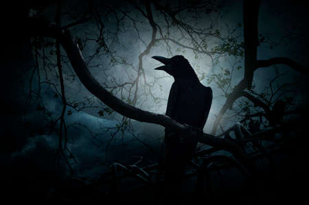 croak: Crow sit on dead tree trunk and croak over fence, moon and cloudy sky, Mysterious background, Halloween concept