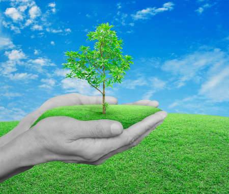 Mani che tengono albero fresco sopra l'erba verde con cielo azzurro e nuvole, il concetto di ecologia