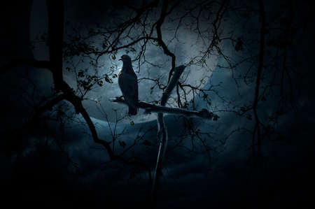 Seagull bird stand on wood cross over dead tree, moon and cloudy sky, Mystery background, Halloween concept