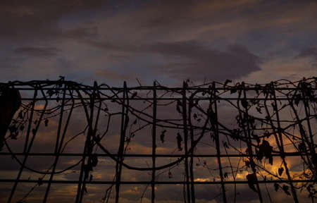 Metal fence with dry leaves over sunset sky Stock Photo