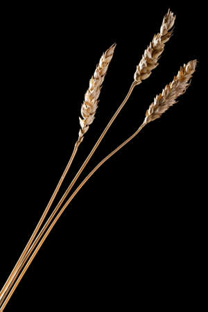 Grain of wheat on a black background  Stock Photo - 8783685