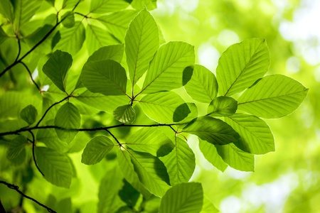 Green leaves, background photo