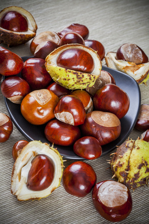 Chestnuts on canvas background  photo