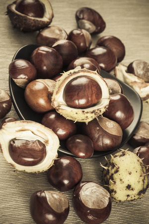 colorized: Chestnuts brown colorized picture