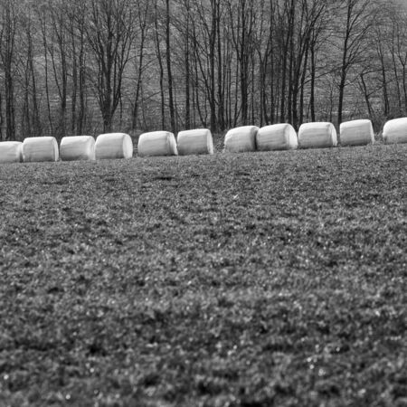 Bales of hay wrapped in white foil, black and white picture, spring, in a row row photo