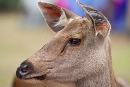 curiously: young deer curiously looking  Stock Photo