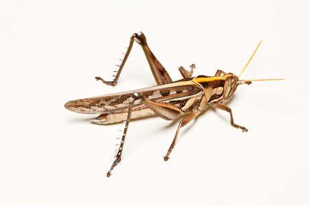 Grasshopper on white floor photo