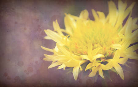 Photo of a yellow  flowers vintage stylized picture with old paper texture photo