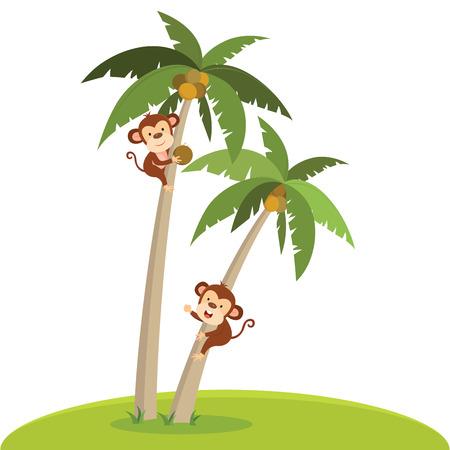 Monos escalando el árbol de coco. Un mono desplumando el coco. Foto de archivo - 82974533
