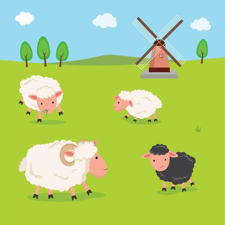 Farm. Schapen en windmolen.