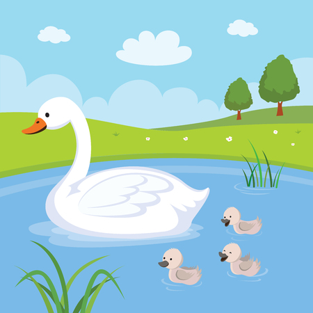 Farm. Swan and baby swans. Mother swan and babies swimming in the pond.