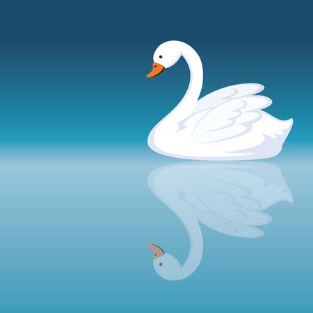 peacefully: Swan. White beautiful swan swimming peacefully.