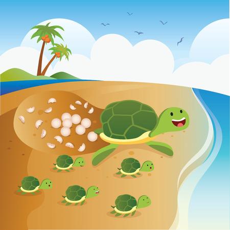 바다 거북은 알을 낳는다. 녹색 바다 거북 아기 거북이와 함께 해칭 계란.