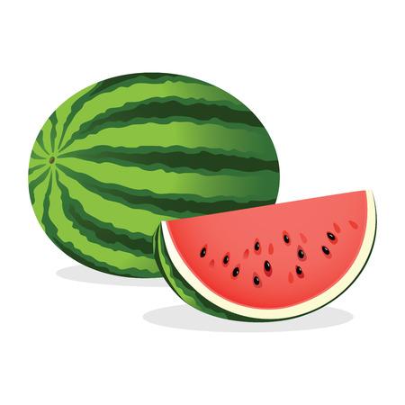 Watermelon illustration.