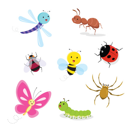 Set of insect. Vector illustration.