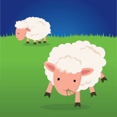 Sheep eating grass.  Sheep on a farm at night.