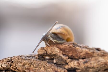 A Little Snail on a tree in Macro Photograpy