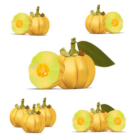 Yellow Garcinia Cambogia Fruit Vector 向量圖像
