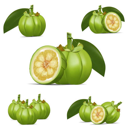 Garcinia cambogia vector icon. Healthy detox natural product superfood illustration for design market menu superfood