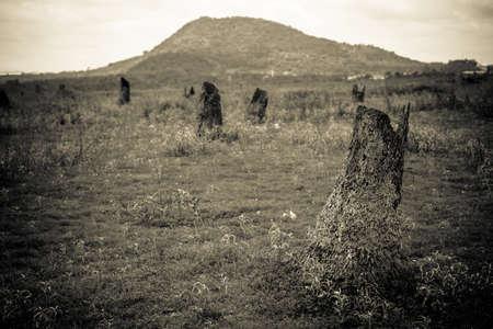deforestacion: la deforestación en Tailandia, negro y la imagen de la pizca Foto de archivo