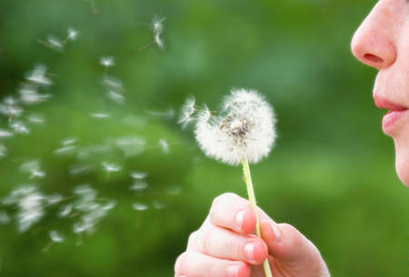 dandelions: Dandelion Blower